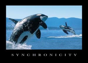 synchronicitywhale