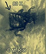 mog-bug-8537d